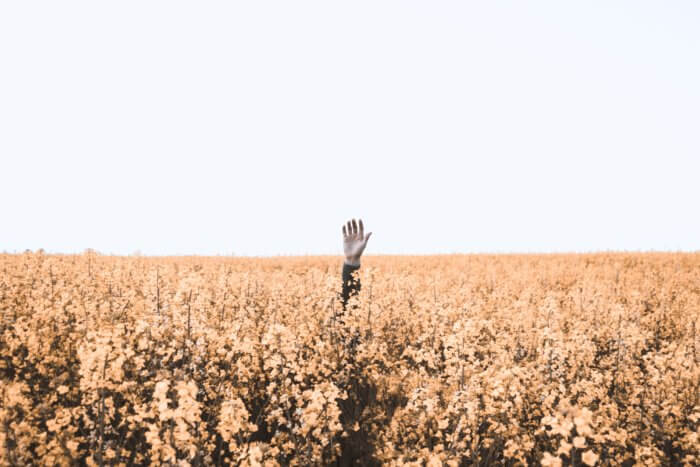 One man's arm rising from a field of wheat–or a sea of data mistakes!